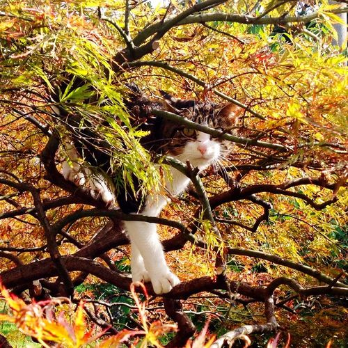 Wildcat in the garden Animal Themes One Animal Branch Tree Domestic Animals Mammal Pets Autumn Colors Spycat Whoareyou? So Cute Tree Trunk Cat Nature Day Beauty In Nature