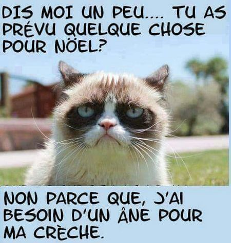 Humour Du Jour Ironie  Joyeux Noël**Marry Chrismas**Feliz Natal Cats Of EyeEm
