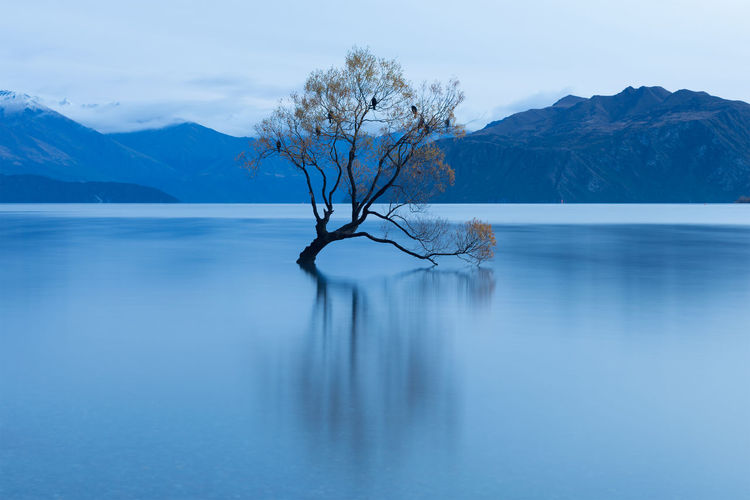 That Wanaka Tree Beauty In Nature Calm Idyllic Lake Lake Wanaka Long Exposure Majestic Mountain Mountain Range Nature New Zealand Non-urban Scene Reflection Reflection Scenics Sky The Great Outdoors - 2016 EyeEm Awards The Great Outdoors With Adobe Tranquil Scene Tranquility Tree Wanaka Water Waterfront Willow Tree