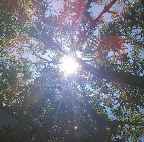 Rayitos del sol... 😊
