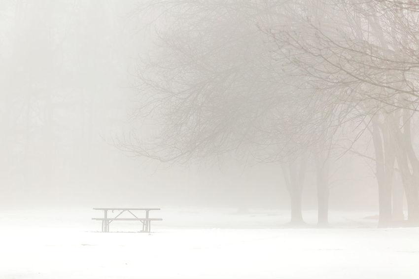 Fog Mist Winter Picnic Table Trees Atmospheric Mood Snow Low Visibility Minimalism Minimal