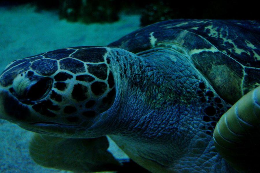 Aquaria Klcc Turtle Underwater Photography