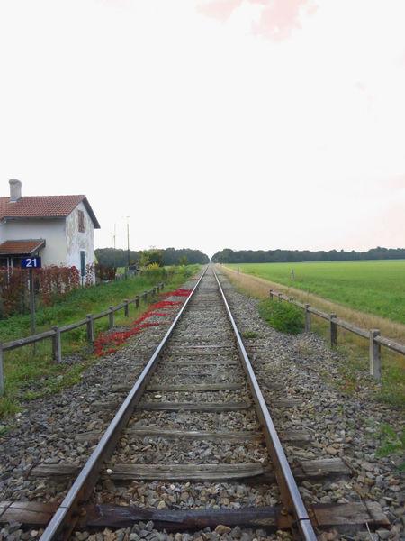 Railway Nature Fluchtpunkt France Frankreich