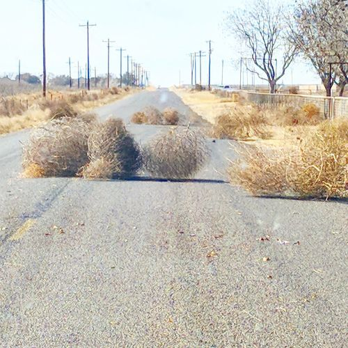 Tumbleweed's Tumbleweed Nature Texas Texas Photographer Texas Landscape Texaslife West Texas Outdoors Sand No People Road City Day