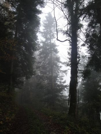 Beauty In Nature Brume Brumes Hivernales Fog Forest Ghostlytrees Landscape Nature Outdoors Tree