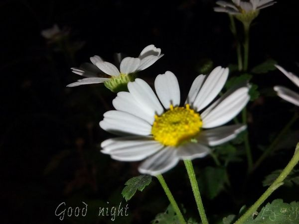 Photography Plants Nature Belleza Al Natural Flowers Goodnight Skin Of The Night Flor Para Ti :)