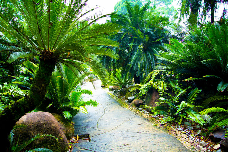 Palm trees and plants growing on footpath
