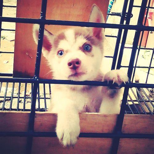 Good Morning rainy day from Thor and me.. Dog Lover Husky Ilovemydog Hello World