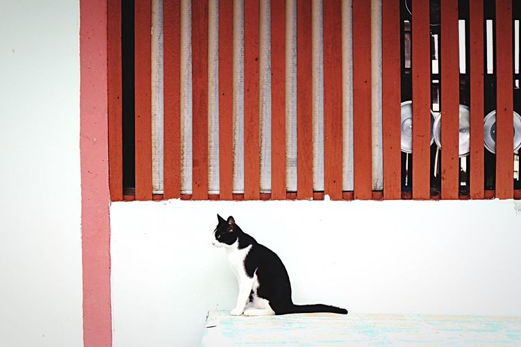 Pets Domestic Cat One Animal Animal Themes Mammal Domestic Animals No People Feline Day Outdoors Sitting Close-up