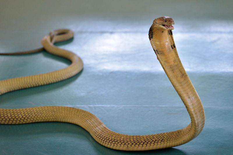 High angle view of an animal