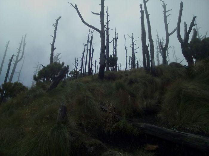 Dead Forest Volcanacatenango Relaxing Nature Lover Guatemala Quechileroguate Explorandoguate ExplorandoGuatemala