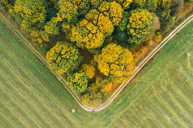 High angle view of yellow flowering plant on landscape