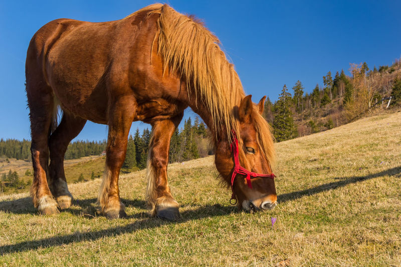 Animals from Apuseni mountains EyeEm Best Shots EyeEm Nature Lover EyeEm Gallery EyeEm Selects Animal Themes Brown Horse Clear Sky Day Domestic Animals Field Full Length Grass Horse Livestock Mammal Nature One Animal Outdoors Sky Standing Tree EyeEmNewHere