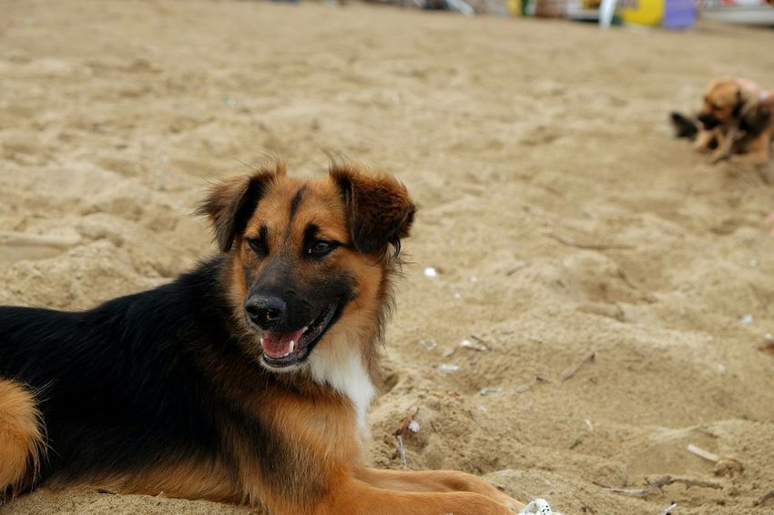 EyeEm Selects Sand Dog Beach Mammal Pets Day Animal Themes Outdoors Nature Domestic Animals One Animal No People Close-up Cute Summer Crete Greece Horizon Over Water Water Animal Wildlife Animal Nature Beauty Happiness