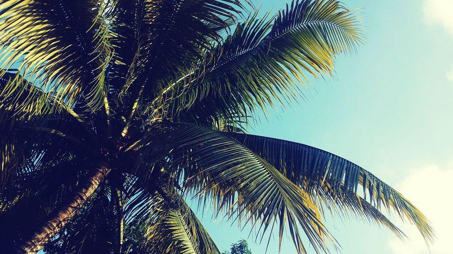 DRfortheworld🌴 Coconutofmyheart🍘 Livinginaparadise Lovingmyplace Heavenoutsidemyhome
