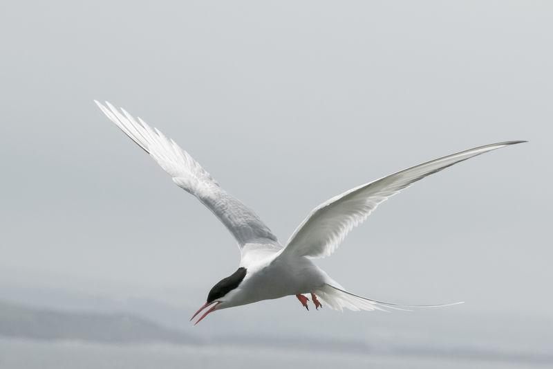 Birds of the