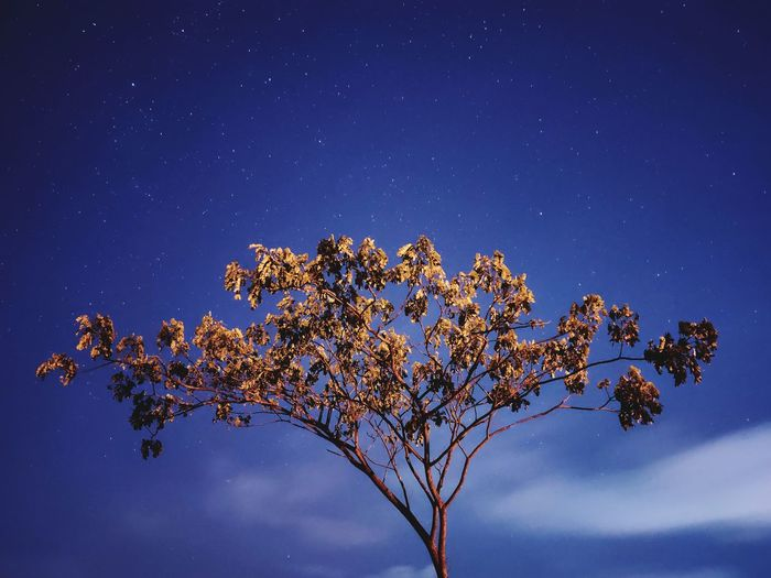 View of tree top branching out against partially cloudy night sky
