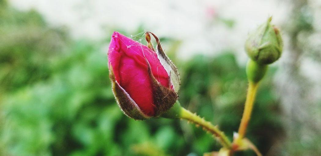 sleeping flower