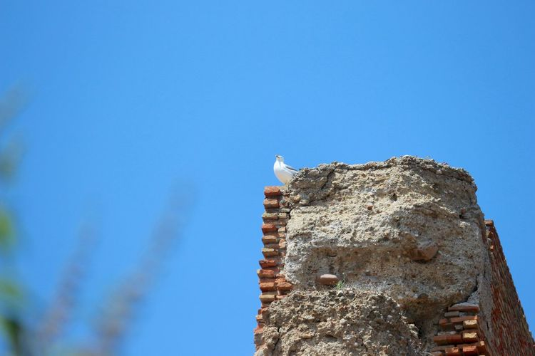 Low angle view of seagull perching on fortified wall at alcazaba of malaga against clear sky