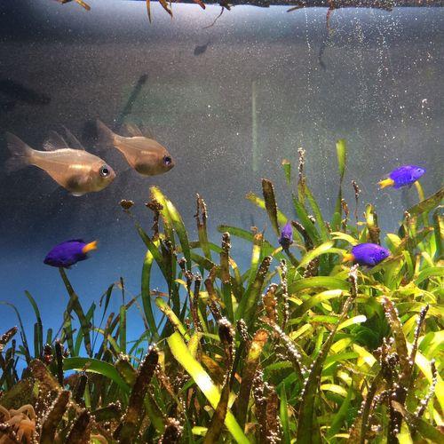 さかなさかなさかな。 Tobaaquarium 鳥羽水族館 Aquarium 水族館 Fish 魚