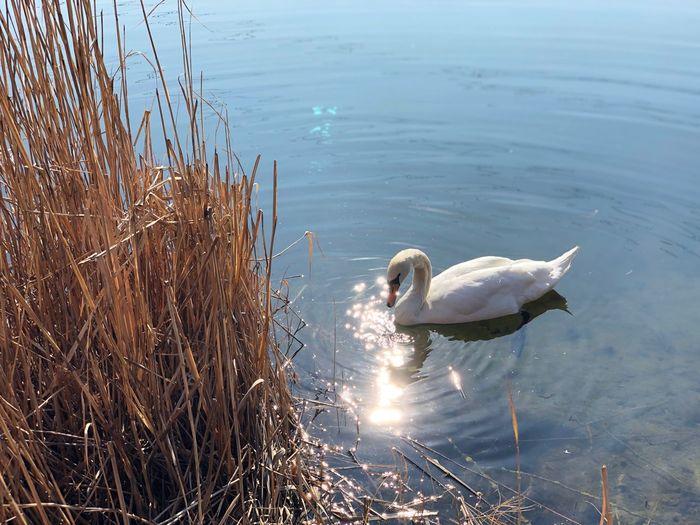 Water Animals In The Wild Animal Themes Animal Animal Wildlife Vertebrate Bird Lake Water Bird Reflection