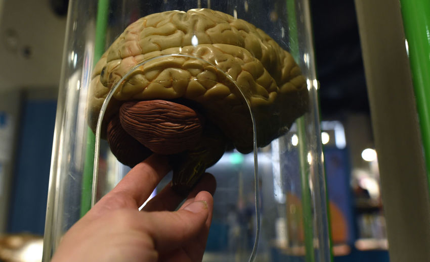Cropped hand holding brain in container