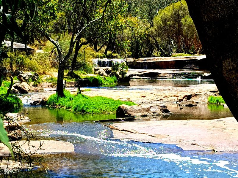 PICNIC TODAY🌟 Hot Day Picnic Love Water Tree Outdoors Reflection Day Nature Beauty In Nature Perspectives On Nature Hanging Out With Nice People EyeEm Best Shots Flower Plant Flowers Springtime Australia River Downstream Bushland Trees Waterfront New Beginnings Photo for my boyfriend Markus💛 Creating A Memory Together💖