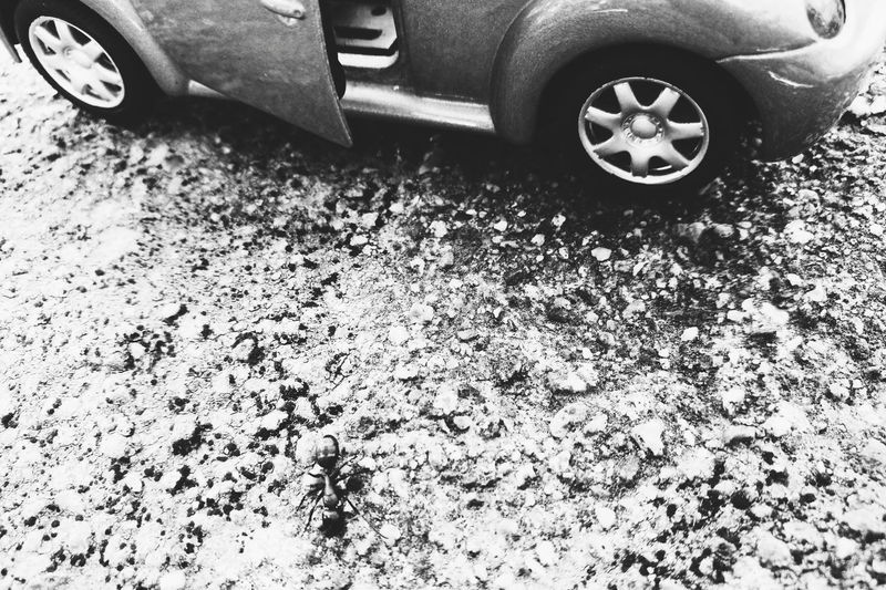 Car Land Vehicle Transportation High Angle View Mode Of Transport No People Low Section Day Tire Outdoors Close-up Ant Ant Farm Beetle VW Beetle Sommergefühle EyeEm Selects EyeEmNewHere Freshness Beauty In Nature Nature Tranquil Scene Landscape Abstract MonochromePhotography