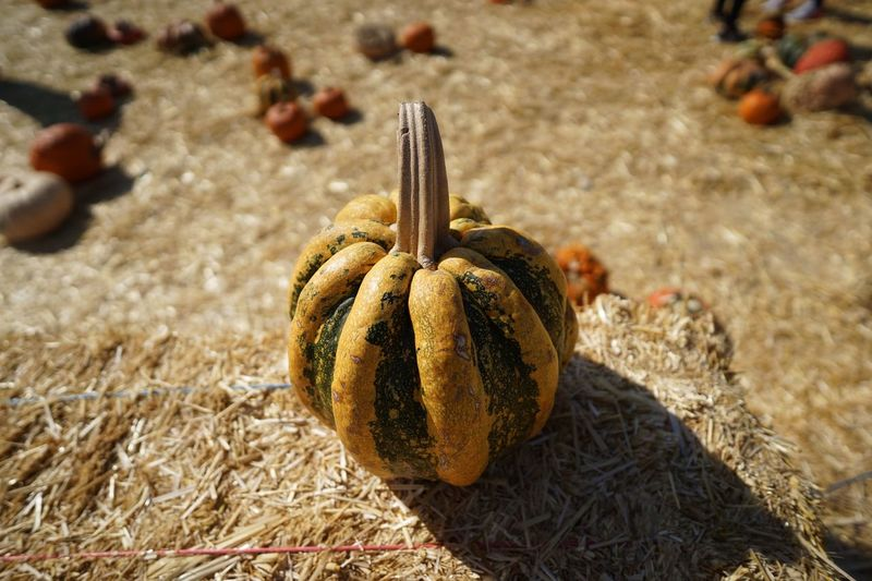 Halloween pumpkin Land Close-up Sunlight Focus On Foreground Nature No People Beach Field Still Life Healthy Eating High Angle View Food And Drink