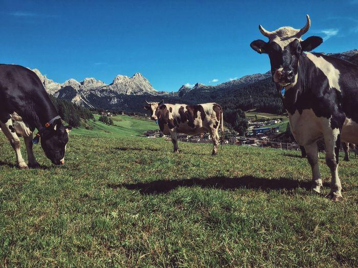 Postcard Wildlife Nature Nature Photography Animals Landscape Dolomites, Italy Altabadia Portrait The Great Outdoors - 2017 EyeEm Awards