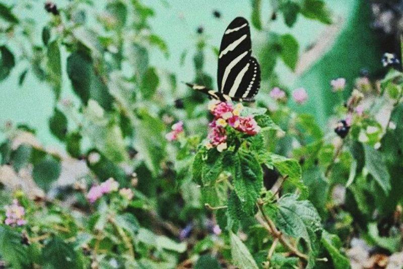 Butterfly 🍃🌸🌷29.09.11