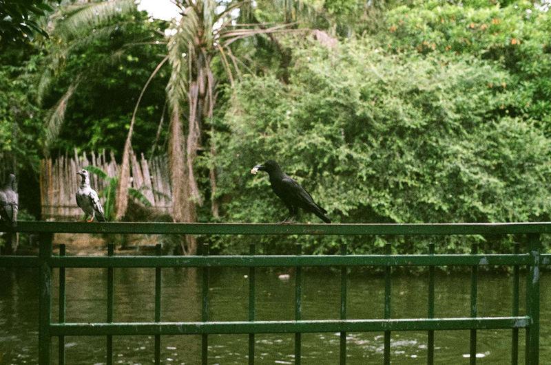 Birds perching on railing against trees
