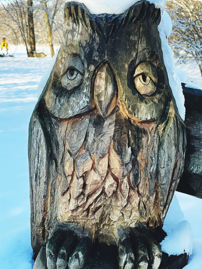 Close-up of carving on tree trunk during winter