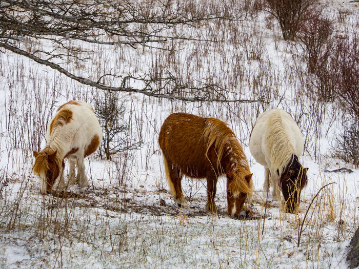 Horses on field during winter