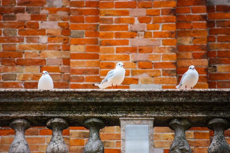 Pigeons perching on brick wall