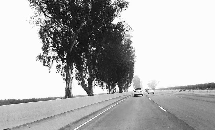Road travel cars trees farms fog highways blackandwhitephotography valley