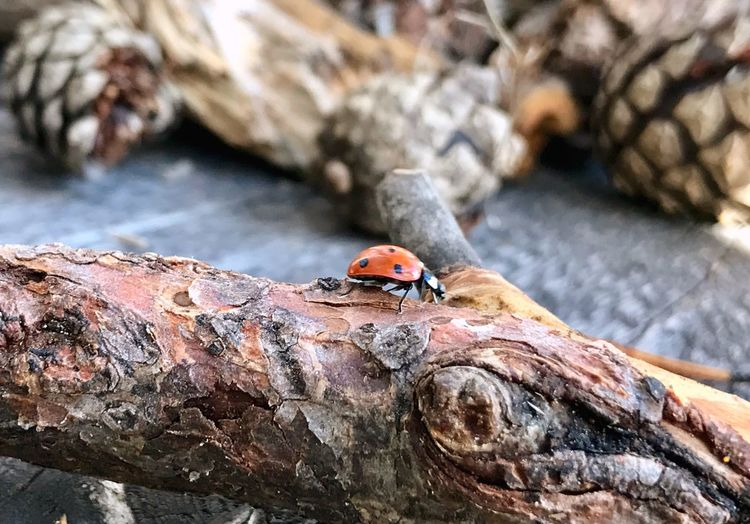 High angle view of ladybug on tree trunk