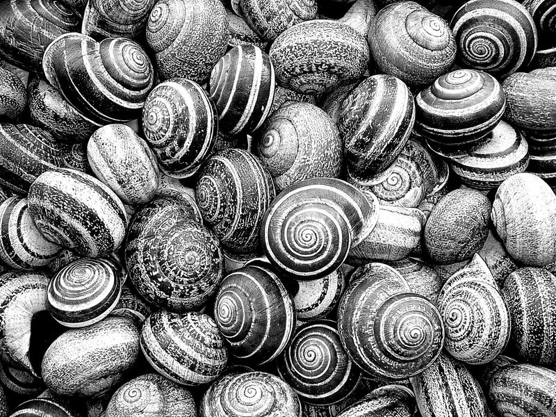 Backgrounds Close-up Coquillage Coquille Day Escargot Full Frame Indoors  Large Group Of Objects No People Pattern Textured
