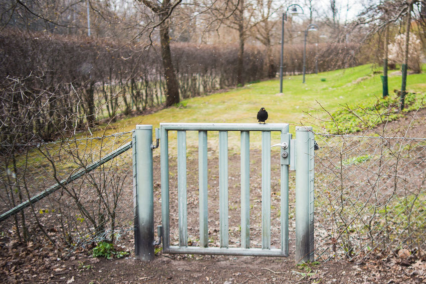 Gate Animal Themes Animals In The Wild Bare Tree Beauty In Nature Bird Black Bird Day Fence Fence Door Garden Lawn Mammal Nature No People One Animal Outdoors Park Spring Tree Wicket