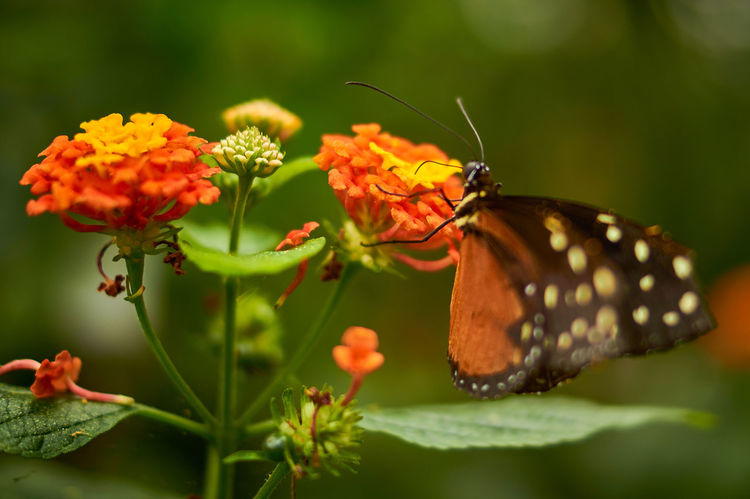 The Great Outdoors - 2017 EyeEm Awards Insect Flower Leaf Nature Animal Wildlife Butterfly - Insect Plant Animals In The Wild Close-up Beauty In Nature Fragility Outdoors Animal Themes Flower Head Butterfly Nature Photography Animal Mainau Island Mainau Bodensee Bokeh Bokeh Photography Sonyalpha SonyAlpha58