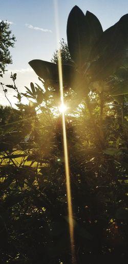 Sunny day Tree