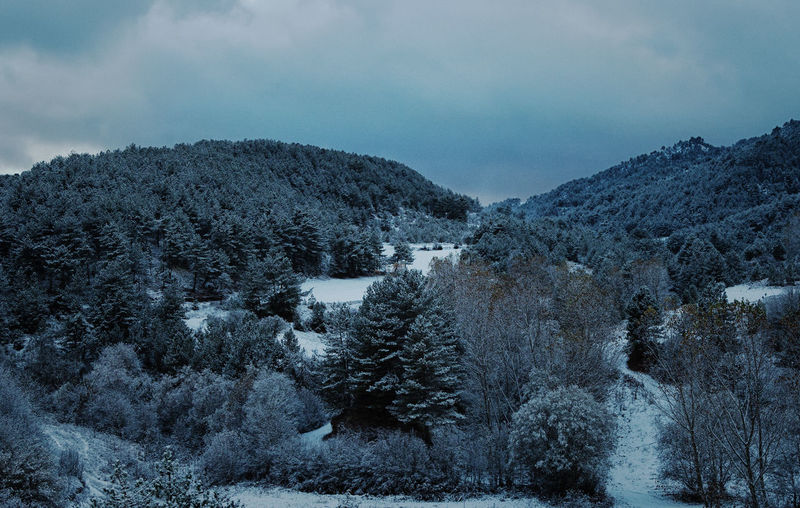 Trees on hills against cloudy sky during winter