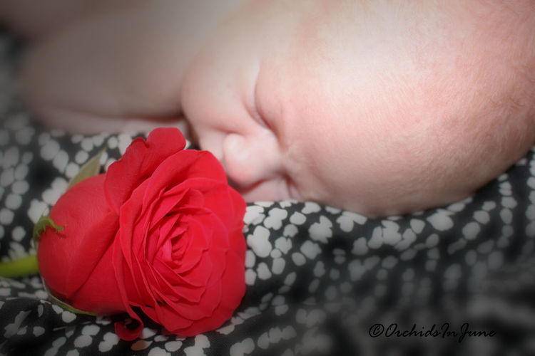 More of baby Amelia Roses' photo session. Please provide honest feedback. Ilikeit Photography Newborn Firsttimeforeverything Canonphotography Virginia Babygirl Close-up FirstTime Rose - Flower