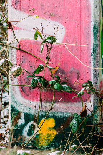 Close-up of ivy growing on abandoned building