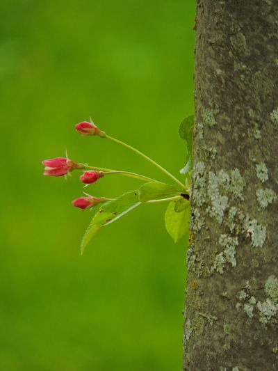I Flowering Trees Plant Close-up Beauty In Nature Nature Growth Focus On Foreground Tree Trunk No People Trunk Fragility Day Red Green Color Vulnerability  Freshness Outdoors Tree Flower Leaf Plant Part