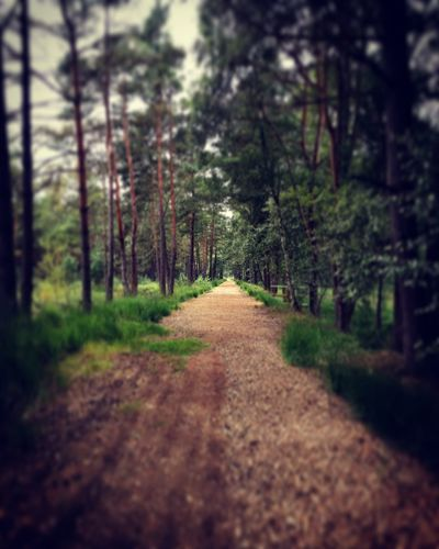 Path To Follow Lost In The Landscape Discover Berlin