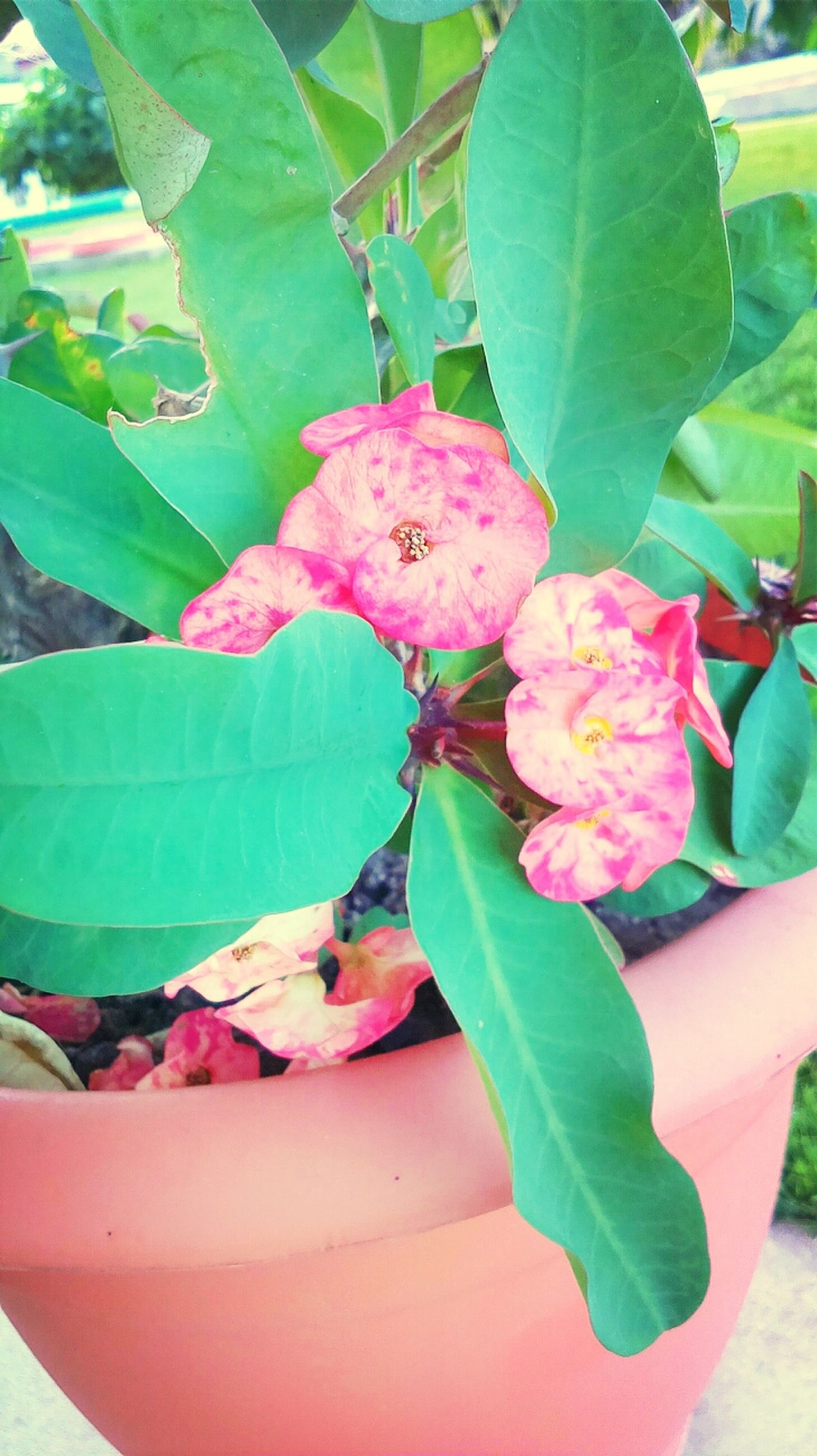 leaf, close-up, freshness, pink color, plant, growth, nature, focus on foreground, flower, no people, indoors, day, green color, food and drink, branch, one animal, food, beauty in nature, animal themes
