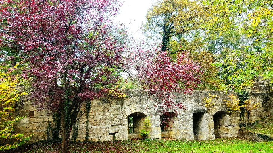 Herbstspaziergang Herbstlaub Herbstfarben Burg Märchen Herbstblätter Alte Gemäuer