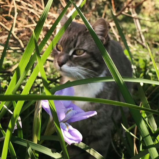 Domestic Cat Flower One Animal Animal Themes Pets Domestic Animals Nature