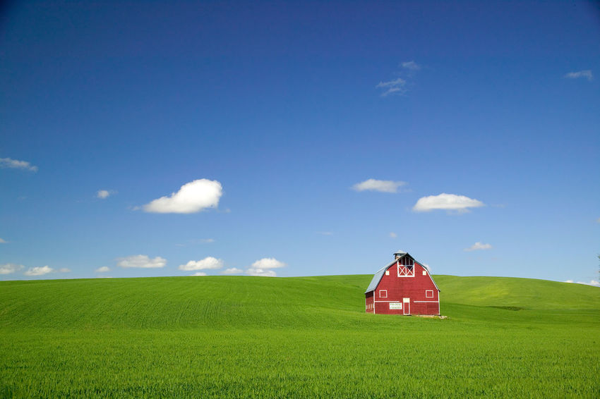 Red barn in Washington State's Palouse country. Agriculture Architecture Barn Beauty In Nature Blue Building Exterior Day Eastern Washington Eastern Washington Farm Scene Field Green Color Growth Landscape Nature No People Outdoors Palouse  Red Red Barn Rural Scene Scenics Sky Tranquil Scene Tranquility Wheat Field